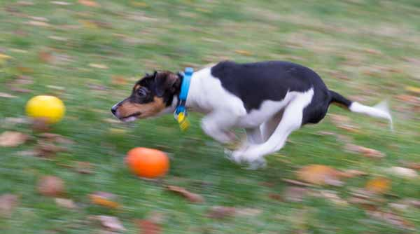 Rory at high speed