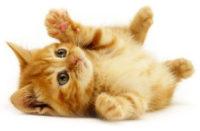 kitten_icon