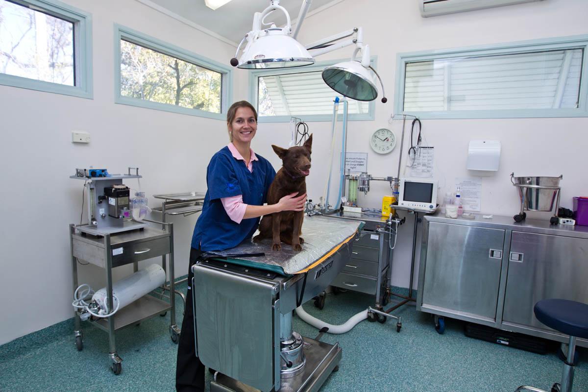Surgery | Hall Veterinary Surgery