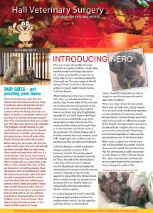 Read our Autumn newsletter online