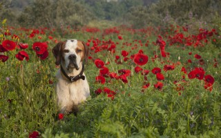 Hall Vet Surgery will be closed on ANZAC Day