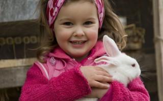 New strain of Rabbit Calicivirus found in the ACT